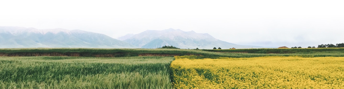 A field of green and yellow